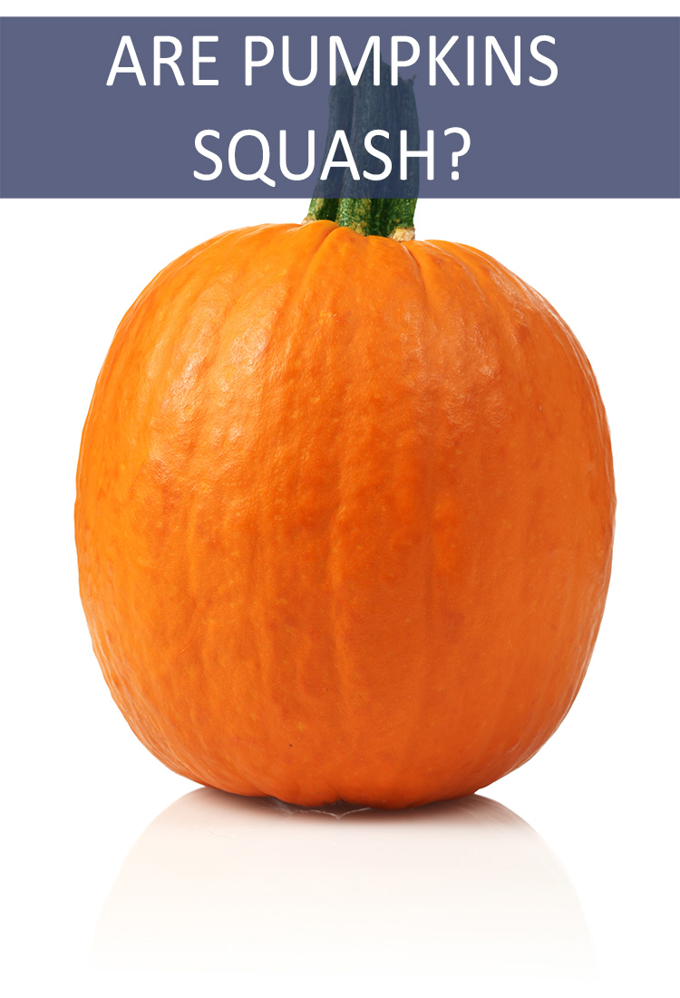 Pumpkins are an Important Part of the Autumn Meal Line-Up. But is a Pumpkin Considered a Squash?
