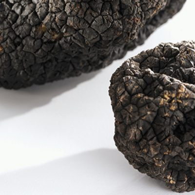 Are Truffles a Fungus?