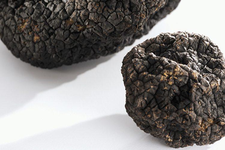 Are Truffles a Fungus?