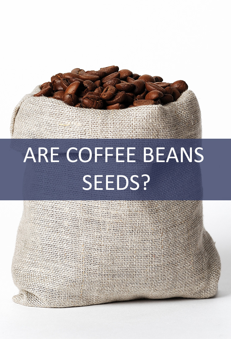 Coffee is Typically Referred to as a Bean in its Unground State, But is That Accurate? Is it Really a Seed?