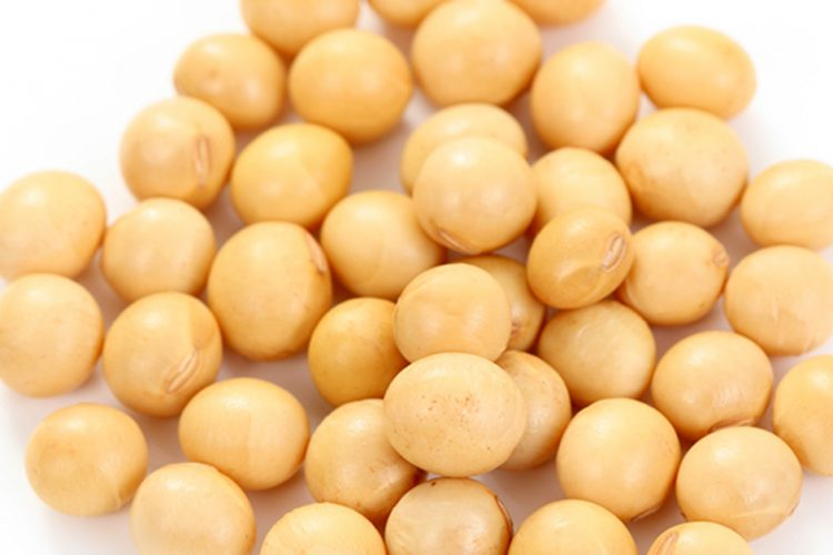 Is Soy a Bean?
