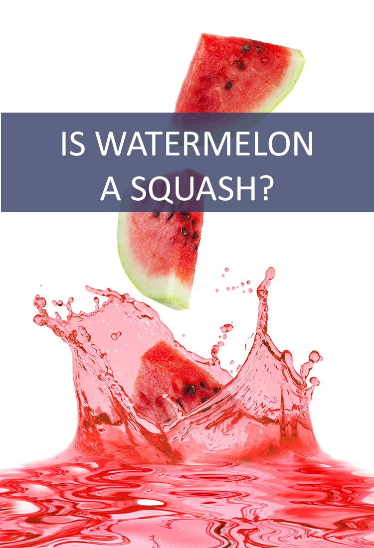 Watermelon is a favorite summertime snack, but is it actually a squash?