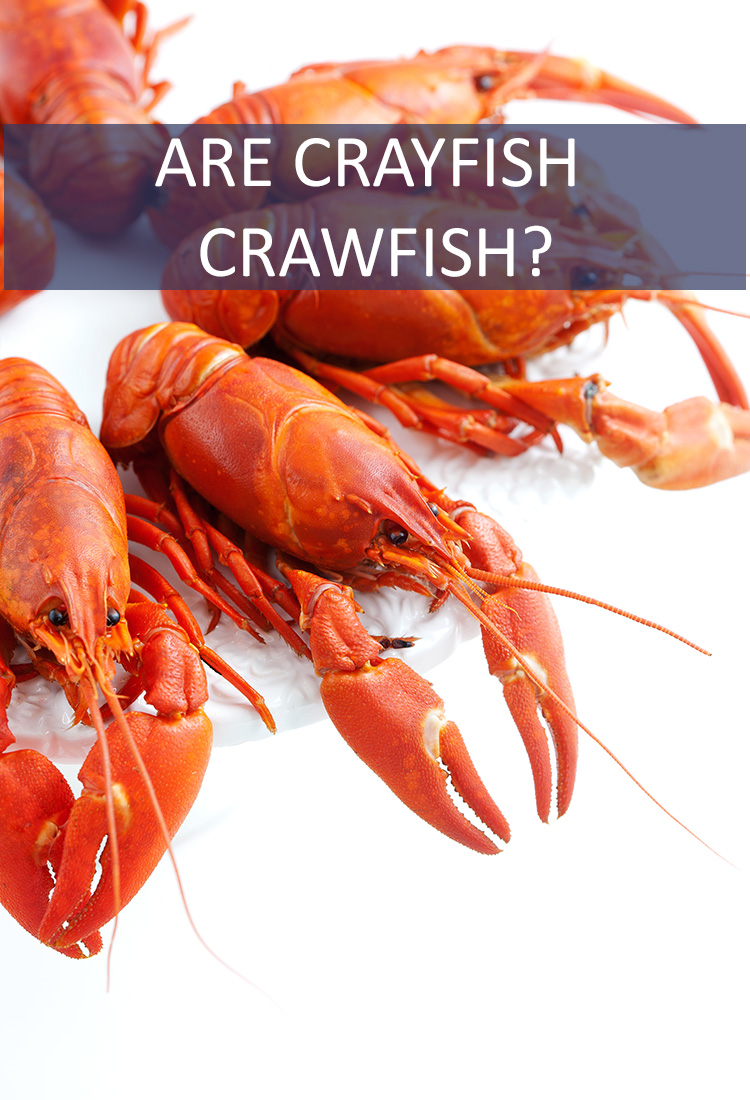 If you're heading down to NOLA, you need to know the difference between crayfish and crawfish, lest you be horribly embarrassed!