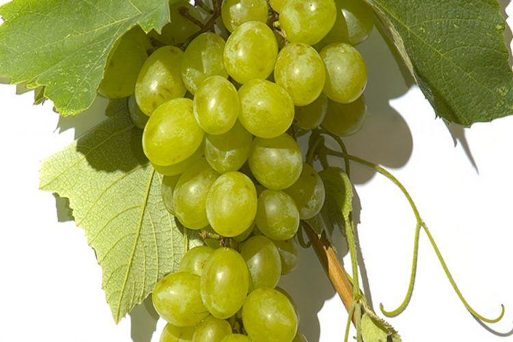 Are Grapes Allowed on Whole30?