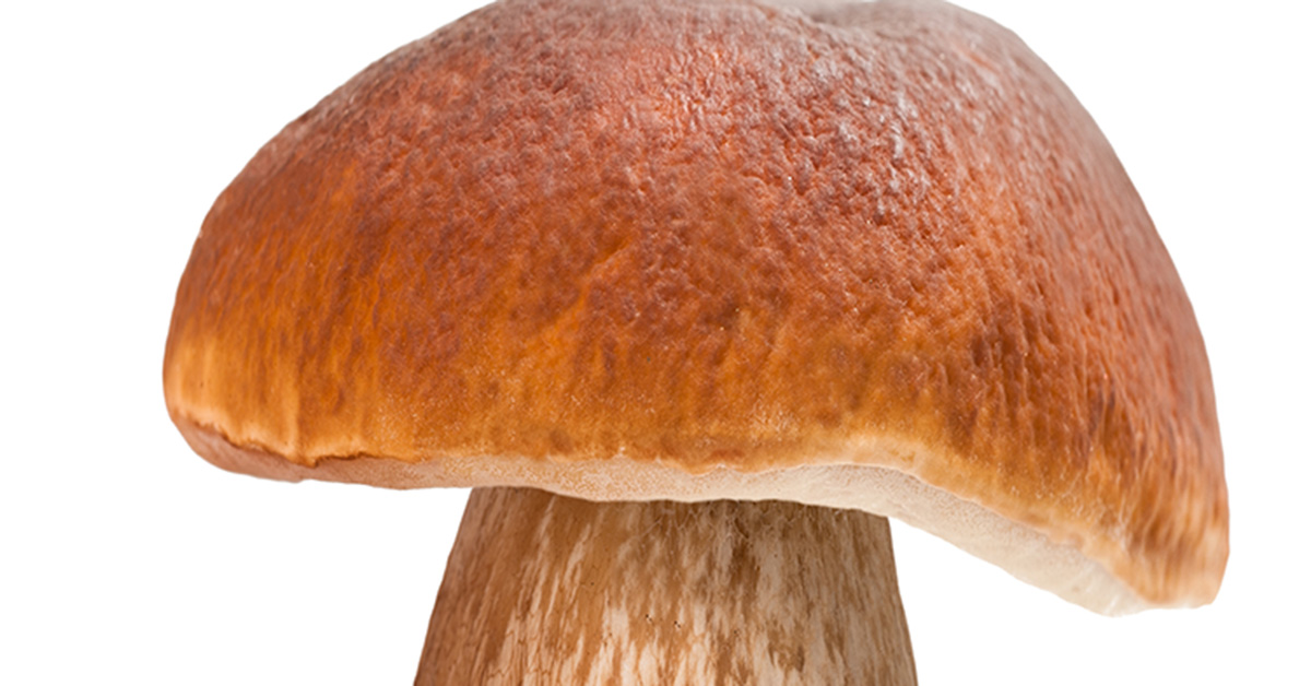 Are Mushrooms Really Mold? - Is This That Food