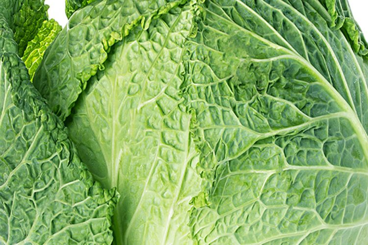 Is Cabbage Lettuce?