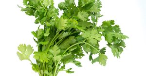Is Cilantro Coriander?