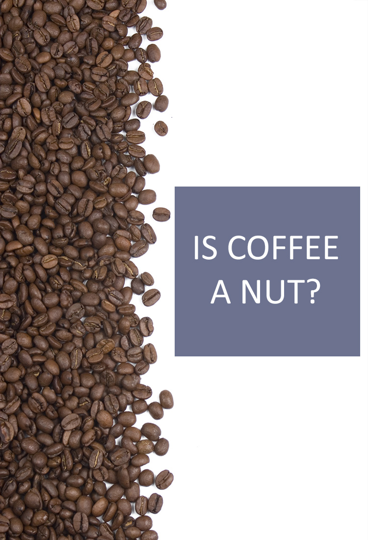 """Coffee beans might be called """"beans"""", but are they actually nuts? Where do coffee beans come from?"""