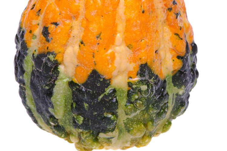 Are Gourds Squash?