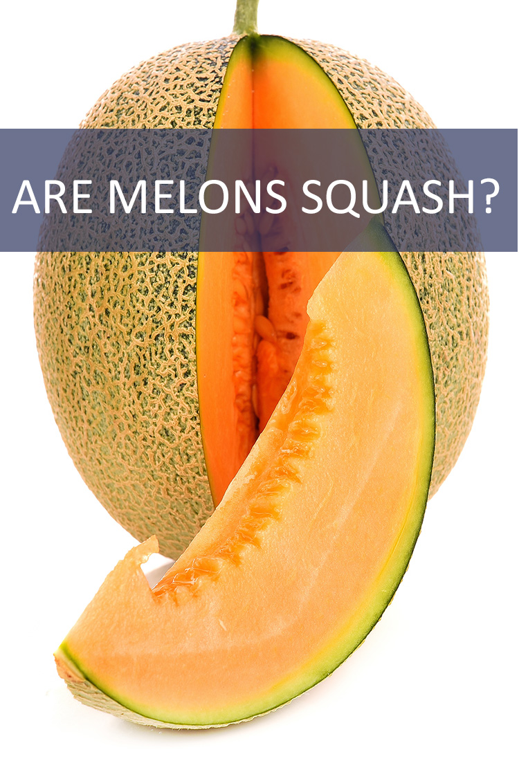 Melons and squash might have more in common than you think. But are they the same thing?