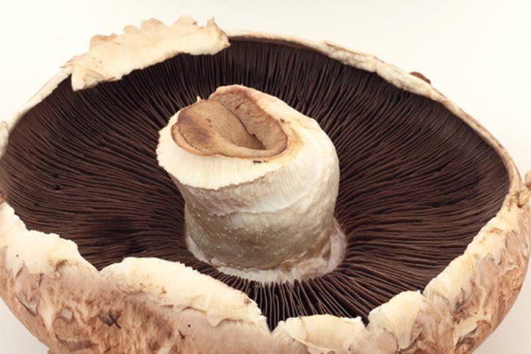 Are Mushrooms Meat?
