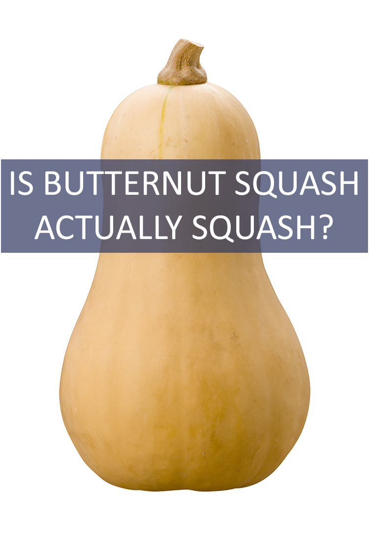 Sure, it has squash in the title, but we've been fooled before. Is Butternut Squash Actually a Squash?