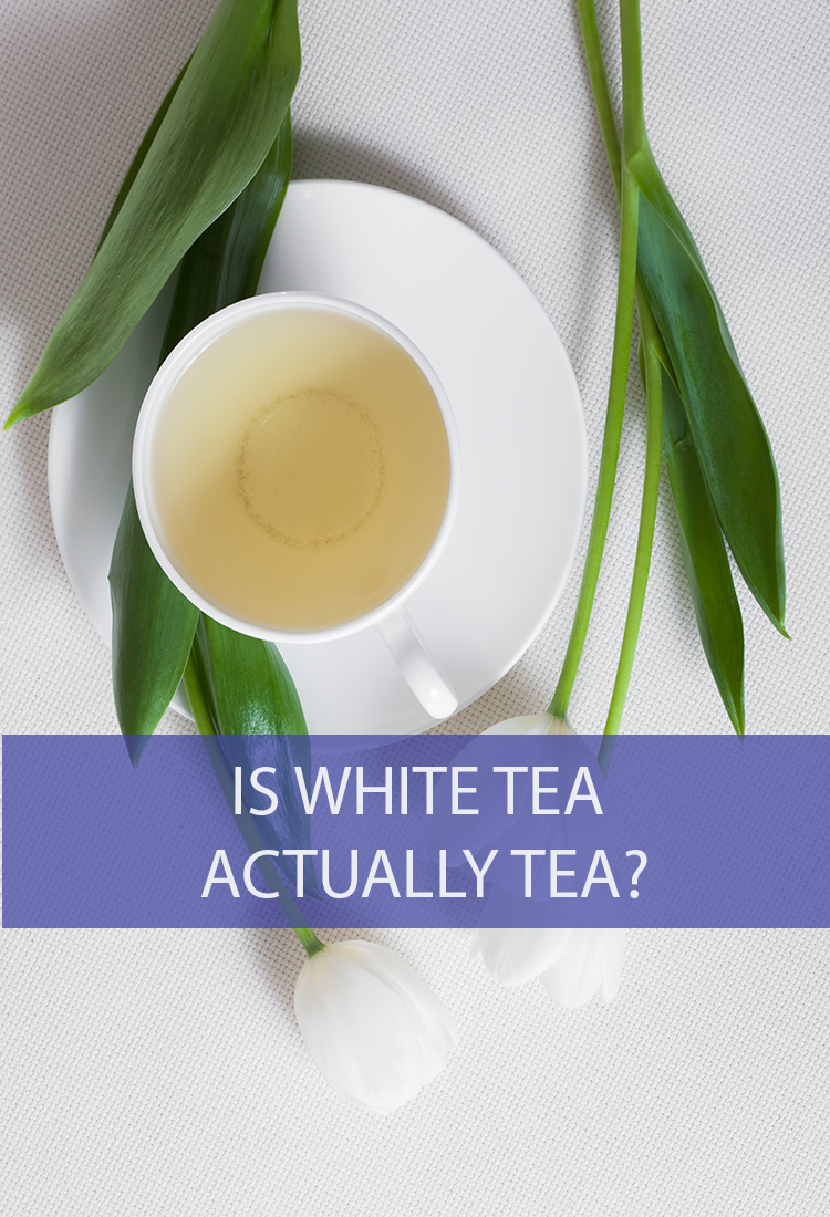 White tea is a fresh favorite of many. But is the name accurate? Is white tea actually tea?