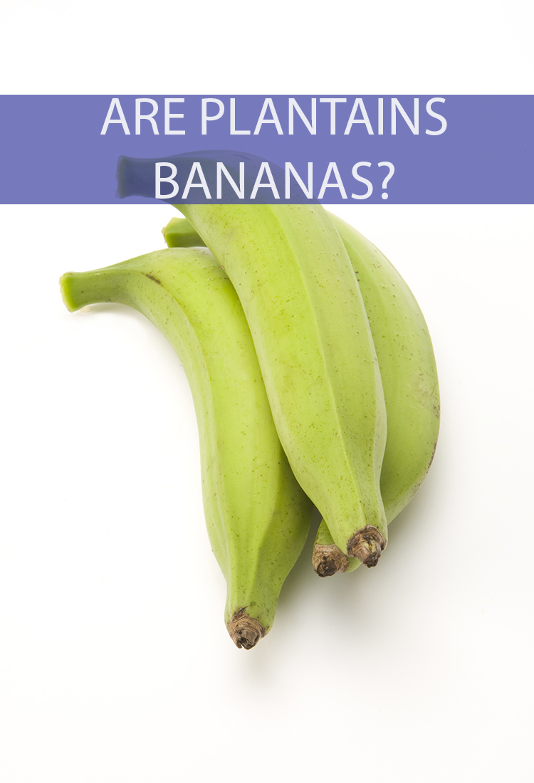 They look an awful lot alike. So, are Plantains and Bananas the Same Thing or are they Distant Relatives?
