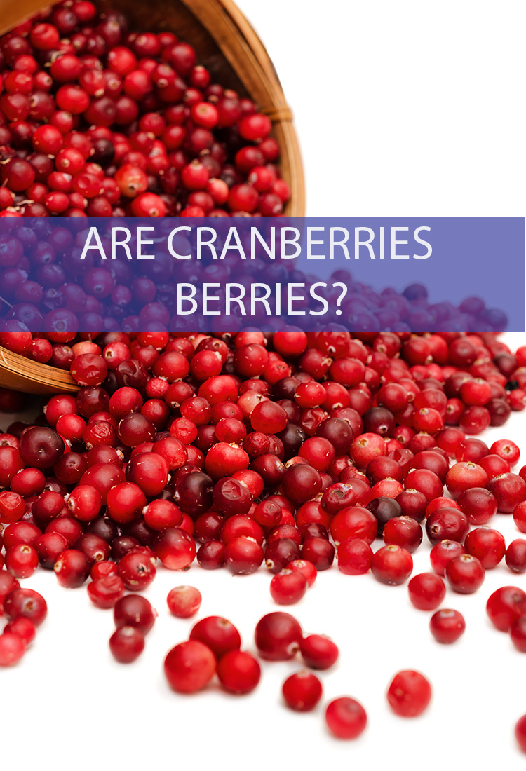 Cranberries are one of the only major commercial fruits native to North America. They're featured heavily during the holiday season, but are they really berries?