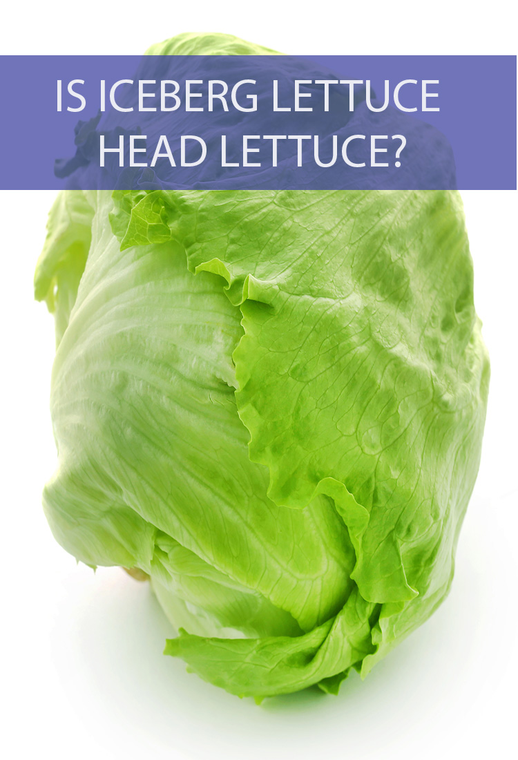 "Before you make your next salad, ask yourself is there a difference between ""head"" lettuce and iceberg lettuce? Are they the same thing?"