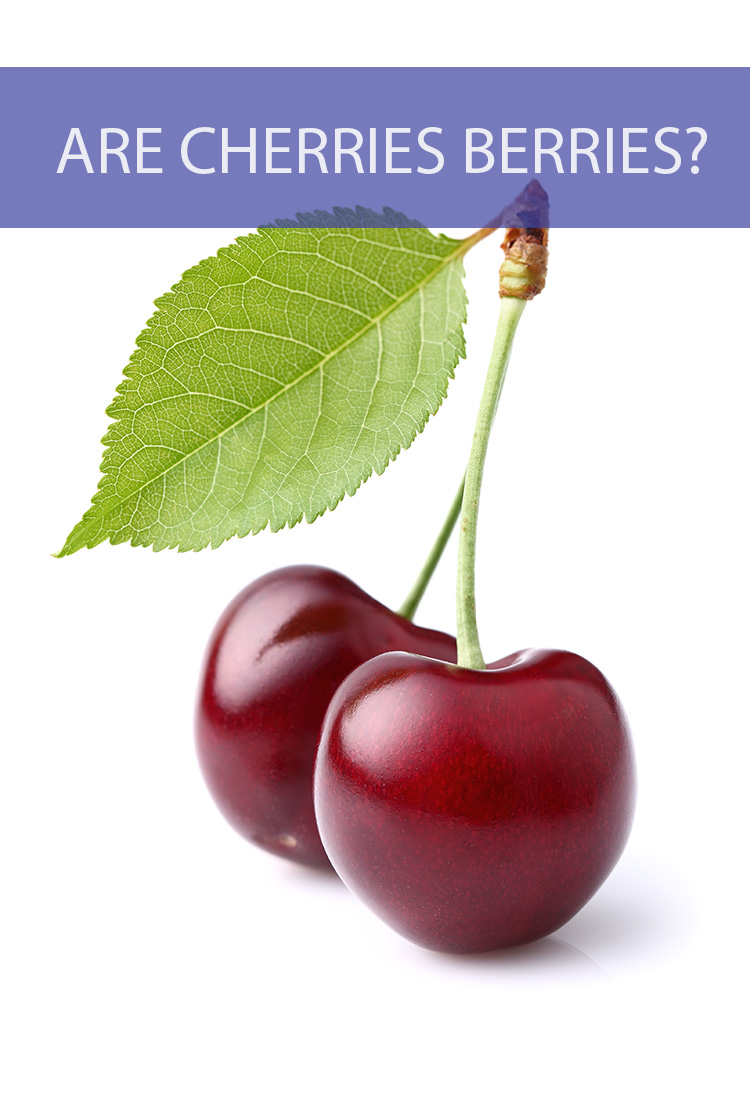 They're small and easily consumable, so do cherries actually belong in the berry family?